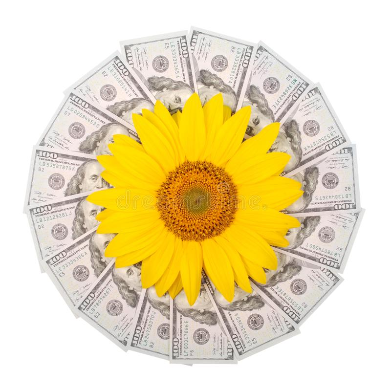 Sunflower flower on mandala kaleidoscope from money. Abstract money background raster pattern repeat mandala circle royalty free stock image