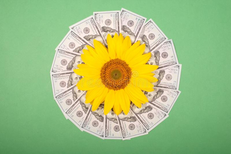 Sunflower flower on mandala kaleidoscope from money. Abstract money background raster pattern repeat mandala circle royalty free stock photography