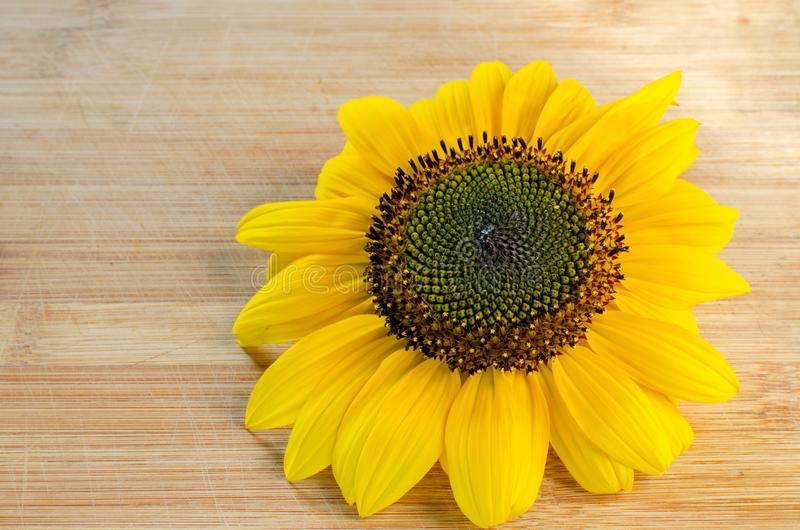 Sunflower flower on a wooden surface. Close-up. Sunflower flower on a wooden surface with yellow leaves, close-up royalty free stock photography