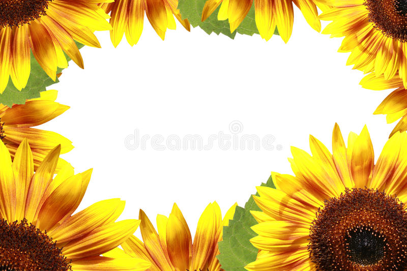 Download Sunflower frame stock photo. Image of border, daytime - 15043646