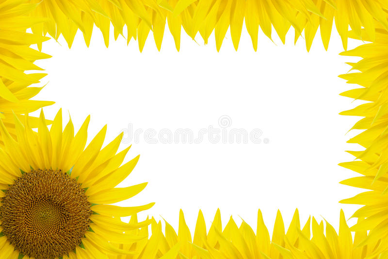 Download Sunflower Frame stock image. Image of space, design, yellow - 15705991