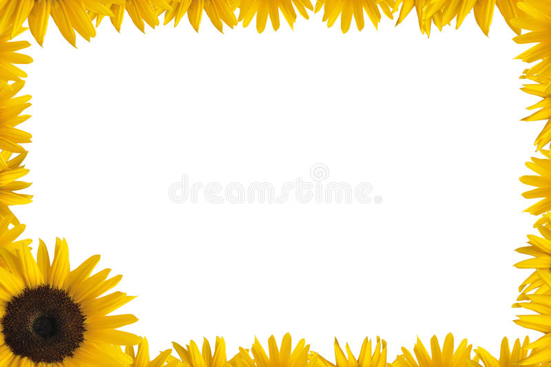 Download Sunflower frame stock image. Image of decorative, card - 17071199