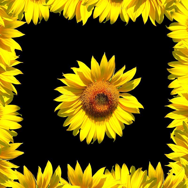 Sunflower and frame on black vector illustration