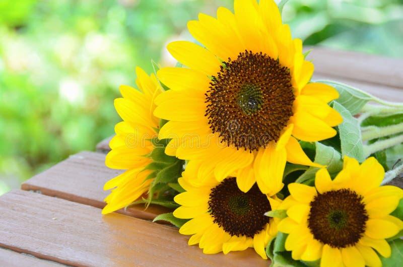 Sunflower in garden stock photography