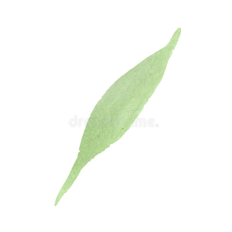 Sunflower green leaf. Floral botanical flower. Watercolor background set. Isolated sunflower illustration element. Sunflower green leaf. Floral botanical flower royalty free stock images