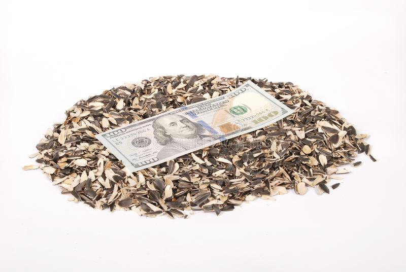 Sunflower husk and money. Abstract money background stock photography