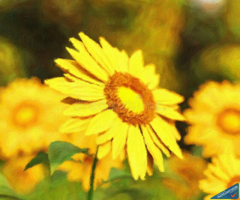Sunflower - ID: 16218-130647-2498 royalty free stock photos