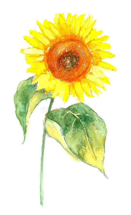 Sunflower illustration royalty free stock images