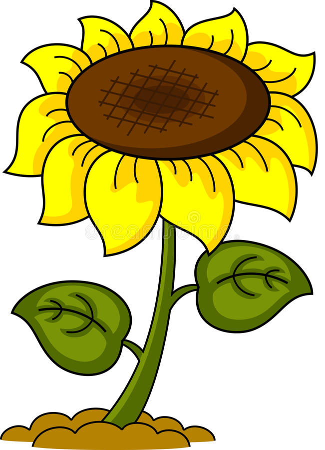 Download Sunflower stock vector. Illustration of rural, petal - 31453770