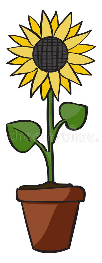 Sunflower, illustration, vector vector illustration