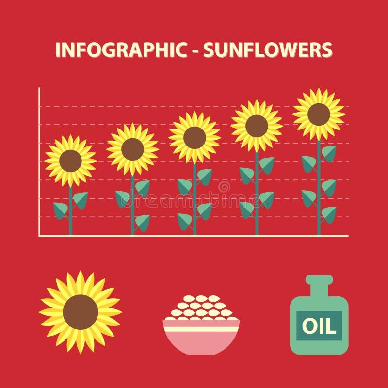 Sunflower infographic royalty free illustration