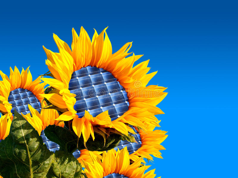 Download Sunflower Stock Photography - Image: 33614762