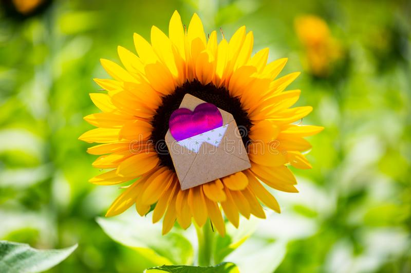 Sunflower with love letter in the middle, romantic, wedding, invitation. Greeting card royalty free stock images