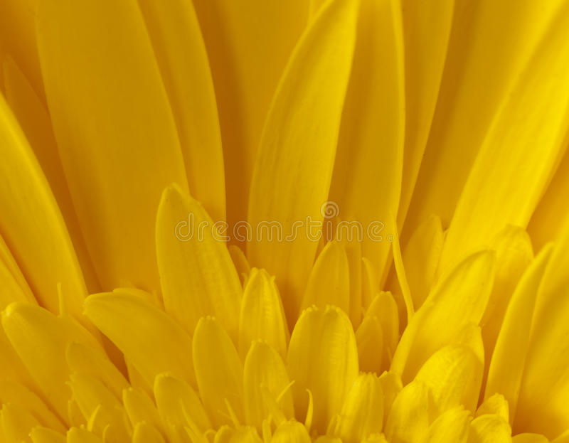 Download Sunflower Macro Detail stock image. Image of close, daisy - 12567689