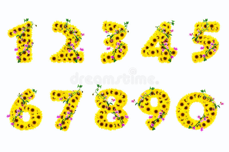 Sunflower Numbers 1-9 Isolated On White Background Stock ...
