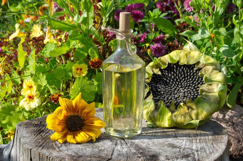 Sunflower oil in a glass Bottle and sunflowers outdoor stock photos