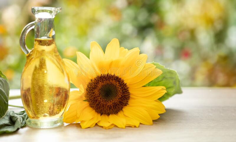 Vegetable oils the oldest beauty care product. Sunflower oil improves skin health and promote cell regeneration royalty free stock image