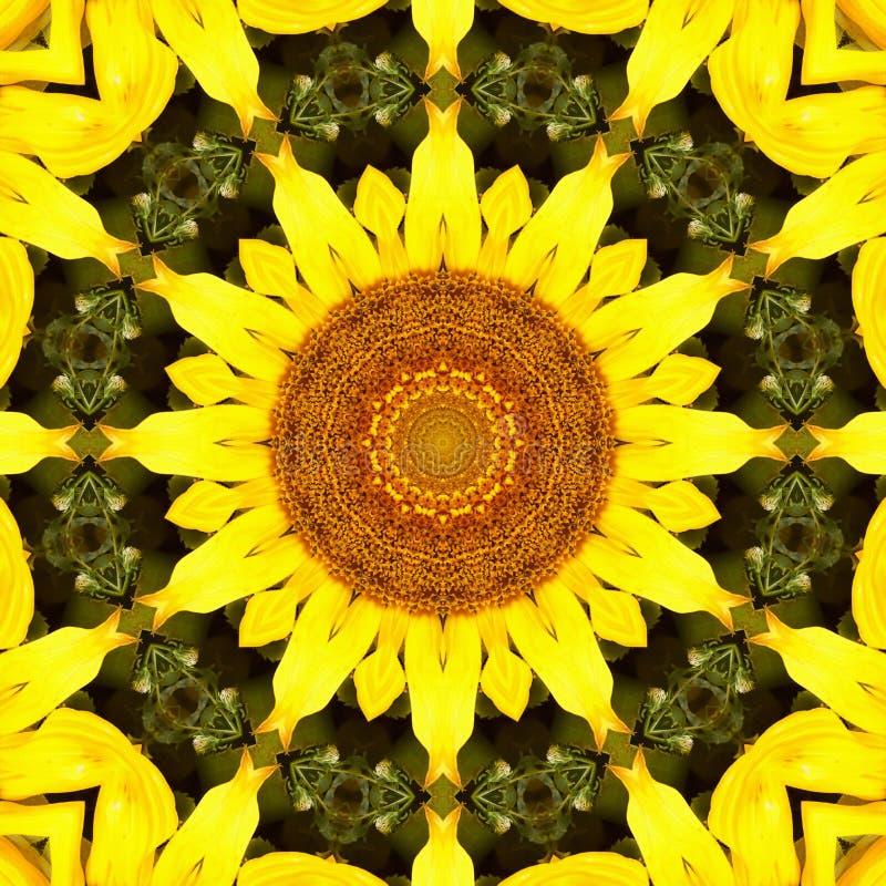 Sunflower pattern background sun flower. graphic color. Sunflower pattern background sun flower floral mandala. graphic color stock photography