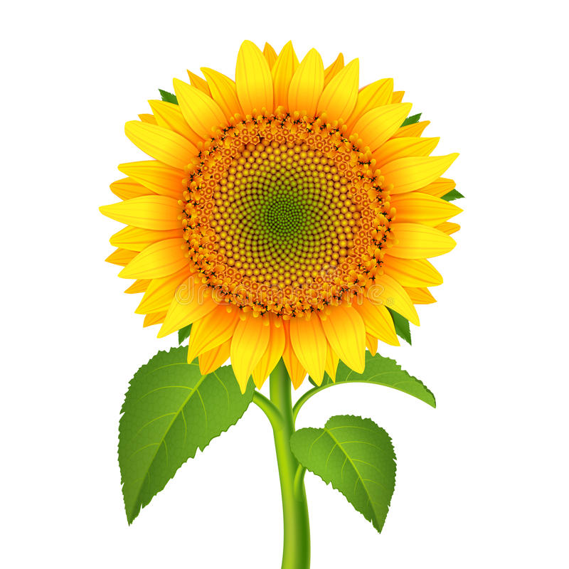 Download Sunflower with pedicle stock vector. Image of happy, colorful - 35282260