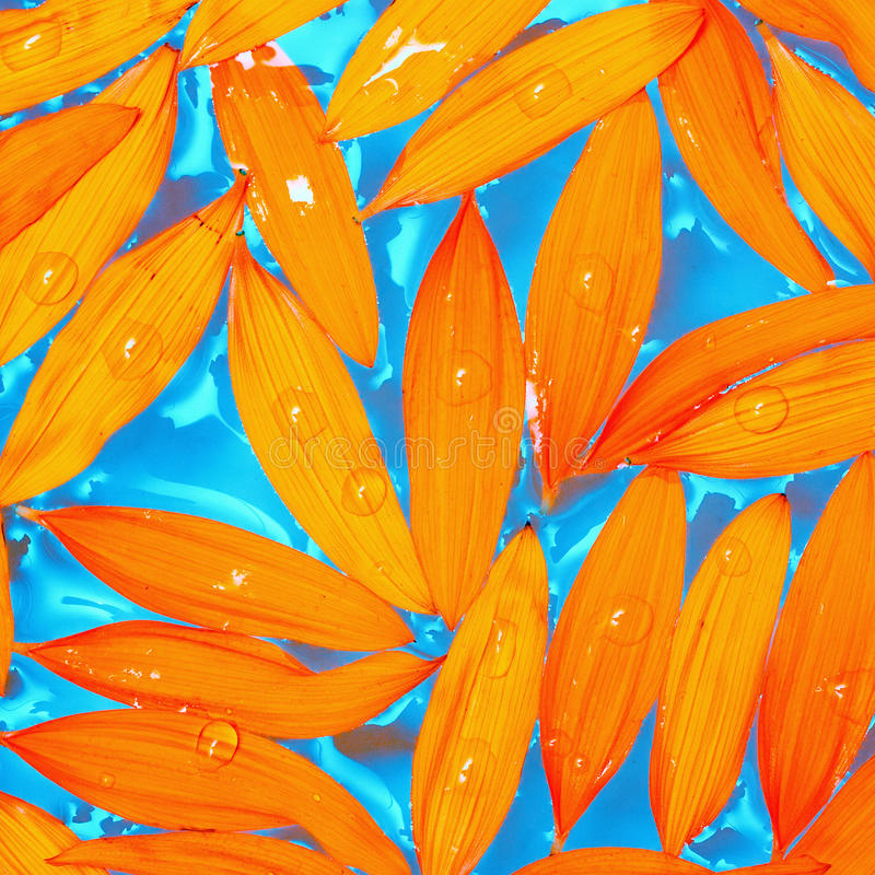 Download Sunflower Petals Stock Photos - Image: 18648033