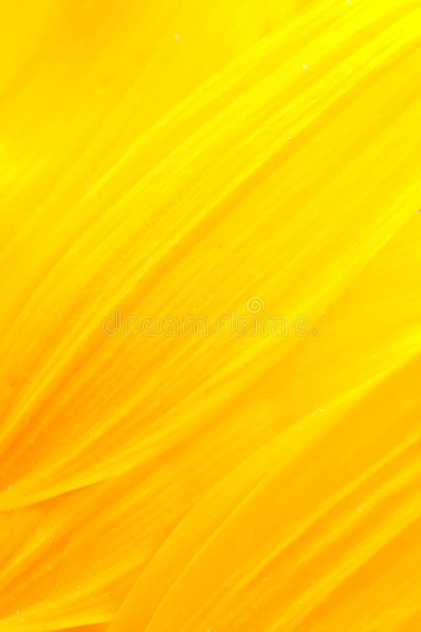 Sunflower petals. Extreme macro shot. Abstract background with sunflower petals stock images