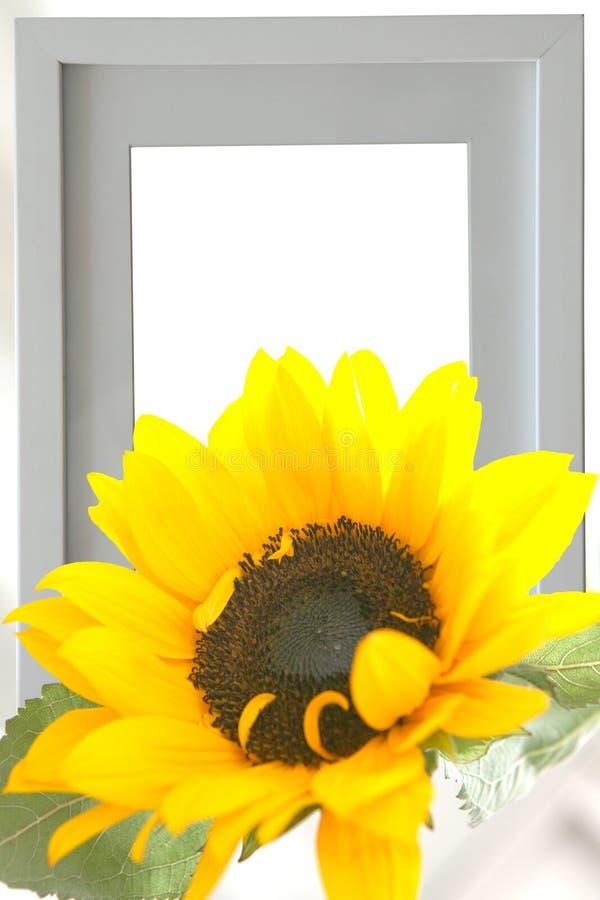 Sunflower and picutue frame stock photos