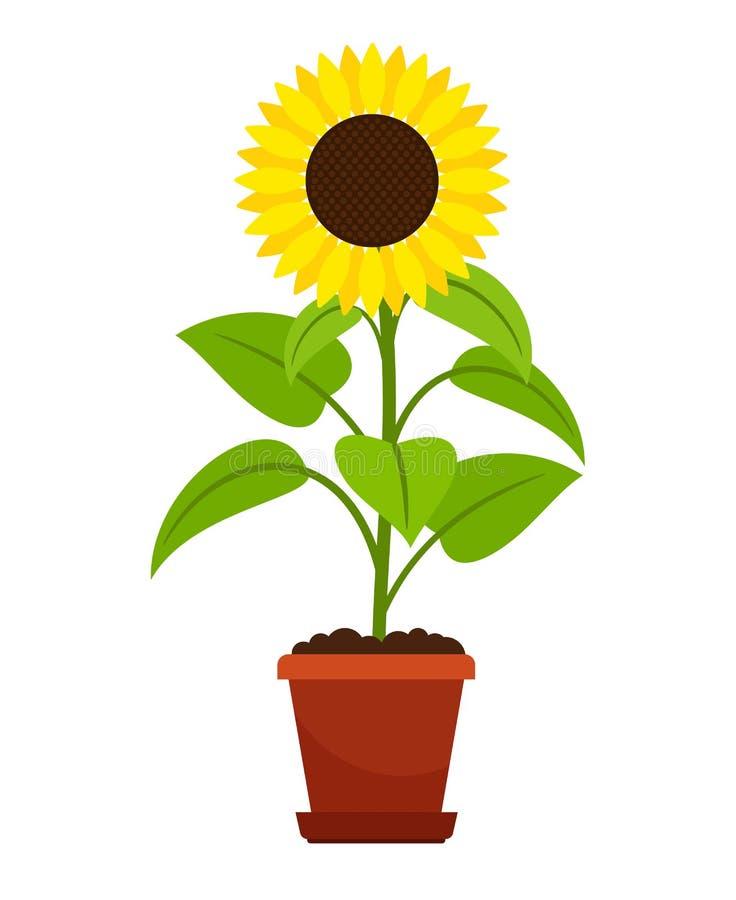 Sunflower plant in flower pot stock illustration