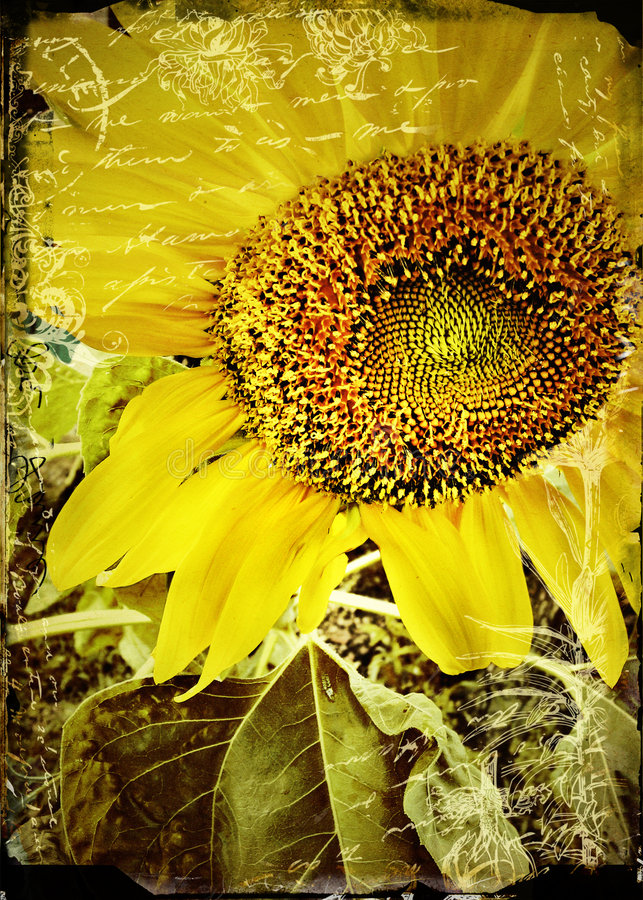 Big Sunflower Head Against An Out-Of-Focus Field Of ...