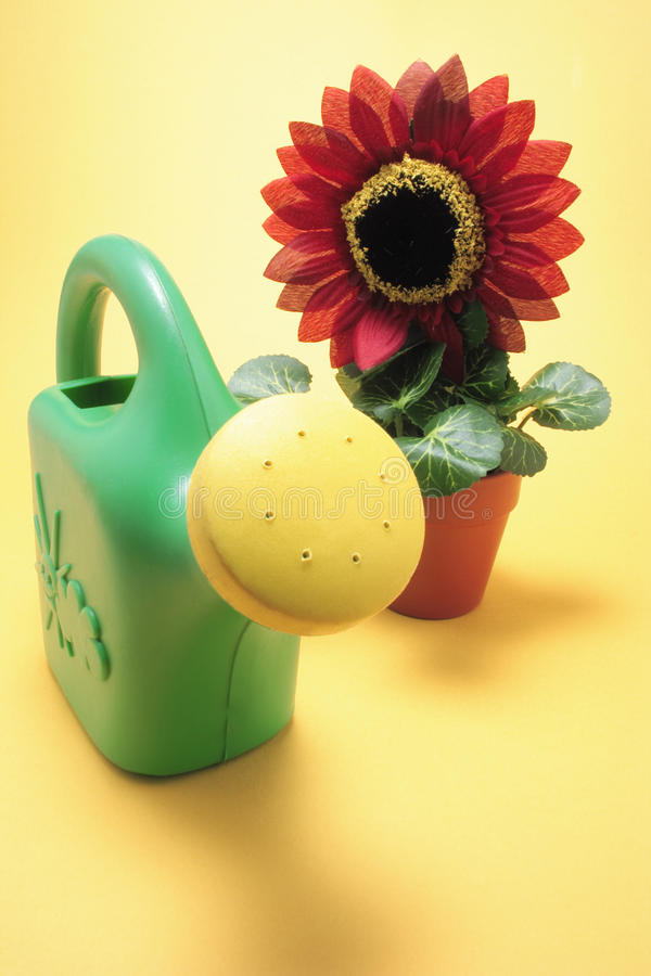 Sunflower Plant and Watering Can royalty free stock photos