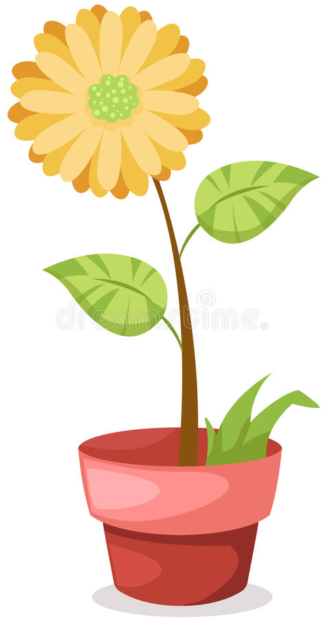Download Sunflower in a pot stock vector. Image of floral, garden - 25965423