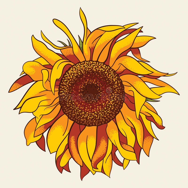 Download Sunflower stock vector. Image of nature, organic, vector - 33162195