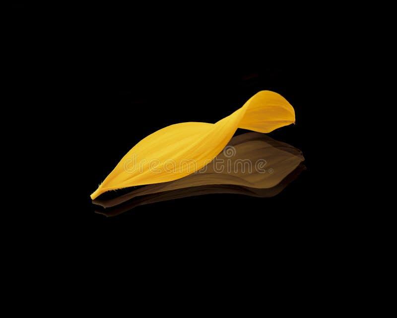 Sunflower's Petal stock image