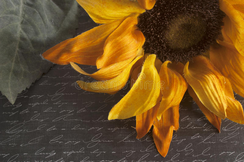 Download Sunflower On Script Written Background Royalty Free Stock Photography - Image: 34233677