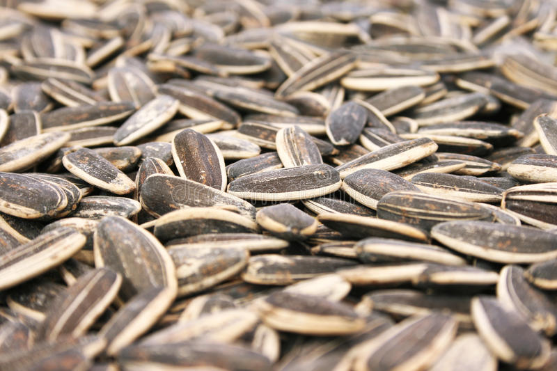 Sunflower Seed Royalty Free Stock Images