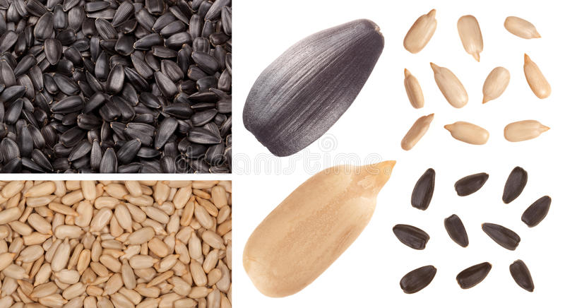 Sunflower seed. Sunflower background and seed isolated on white
