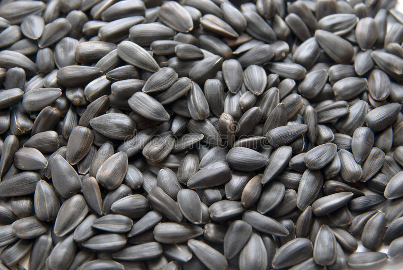 Sunflower seed. Close-up of Sunflower seed. texture background royalty free stock photography