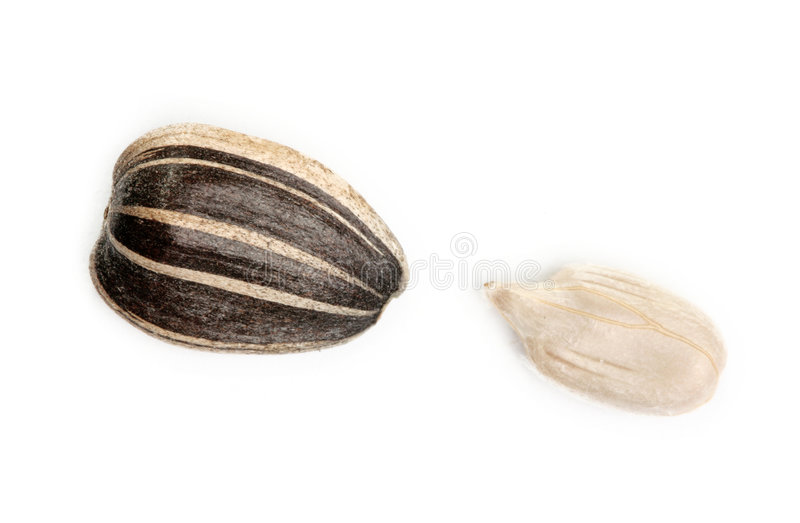 Sunflower seed. Isolated on white background royalty free stock photography