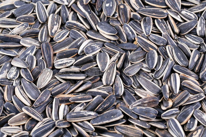 Sunflower seed. Dry roasted sunflower seed on table royalty free stock photo