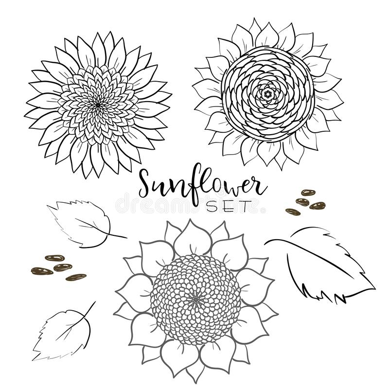 Sunflower seed and flower line vector drawing set. Hand drawn isolated illustration. Food ingredient vintage sketch. Great for oil royalty free illustration