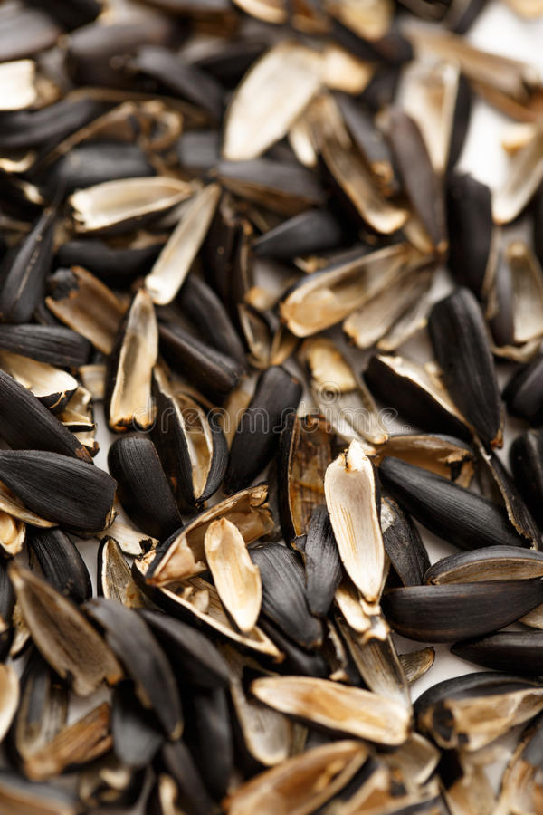 Sunflower seed husk. S on the white background royalty free stock photos