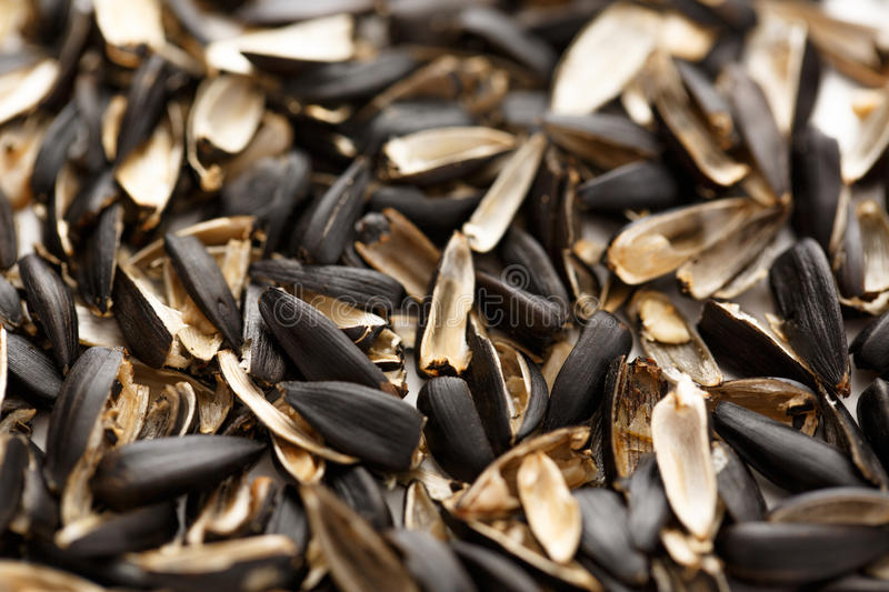 Sunflower seed husk. S on the white background stock images