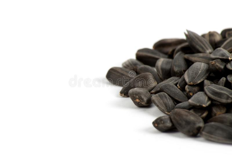 Sunflower seed with husk. Isolated on white background. Food ingredients stock photography