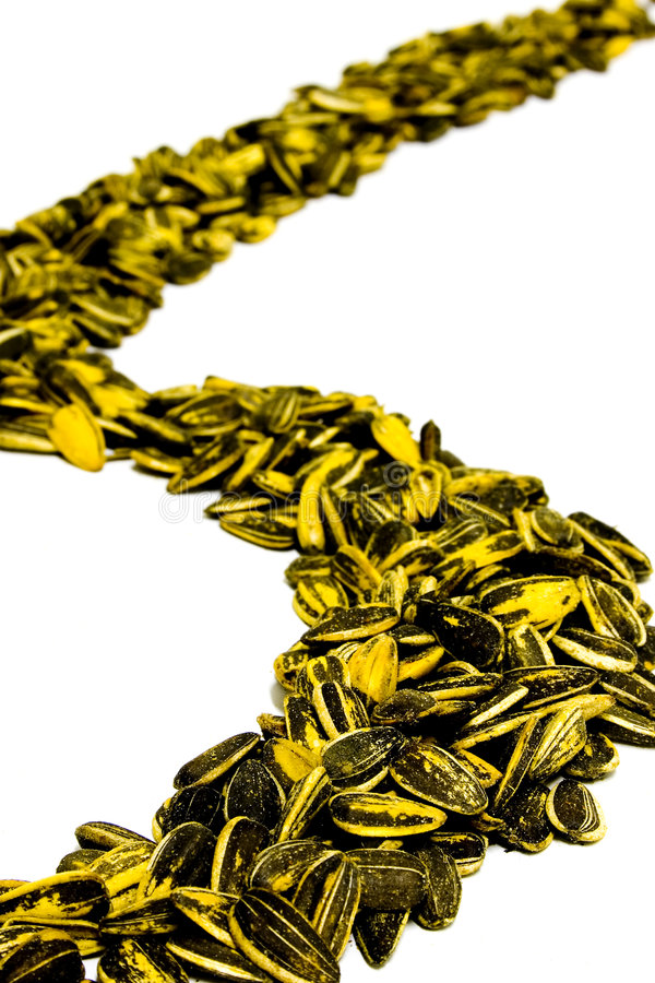 Sunflower Seed S-curve royalty free stock photography