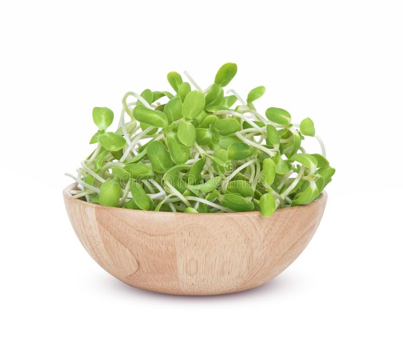 Sunflower seedlings, Sunflower sprout  in Wood bowl isolated on white background royalty free stock images