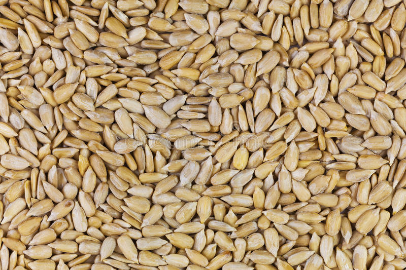 Download Sunflower seeds stock photo. Image of meal, many, natural - 25069846