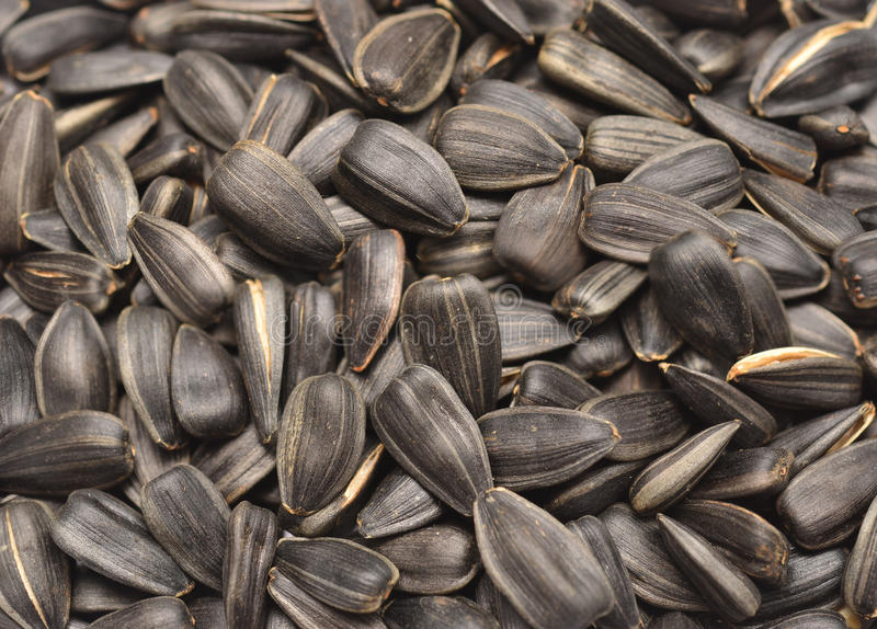 Download Sunflower seeds stock photo. Image of black, ingredient - 27685956