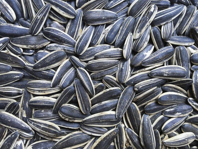 Sunflower seeds, background, striped black-and-white seeds stock image