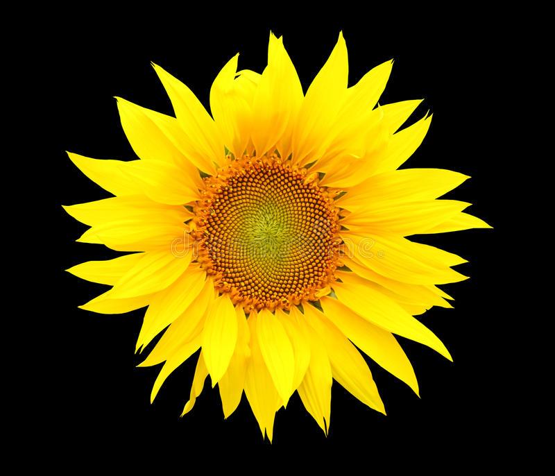 Download Sunflower Seeds  On Black Background. Stock Photo - Image: 10303712