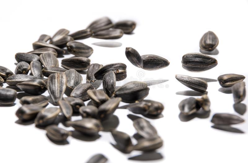 Sunflower seeds of black flowers jumping to music.  royalty free stock image