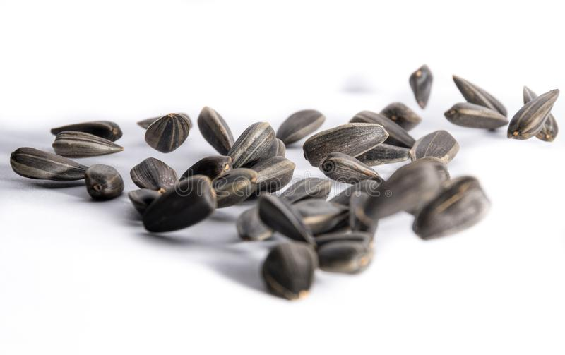 Sunflower seeds of black flowers jumping to music.  stock images